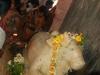 shivaratri-b.jpg